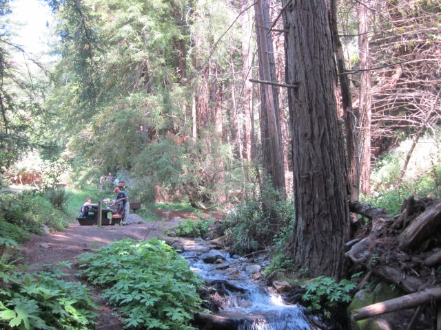 Our picnic spot in Julia Pfeiffer Burns state park